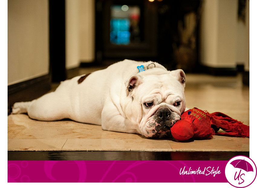 pet photography,dog,los angeles, burbank photography,bulldog photo